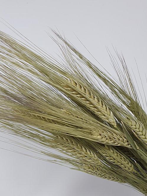 Natural Barley