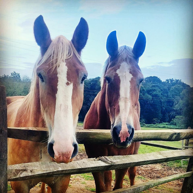 Horses Welcome Too!