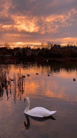 Binghams Pond.JPG