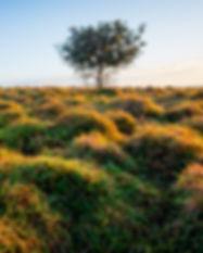 RL 170807 goanna headland.jpg