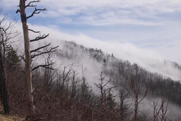Michael Smith - Shenandoah Park Fog