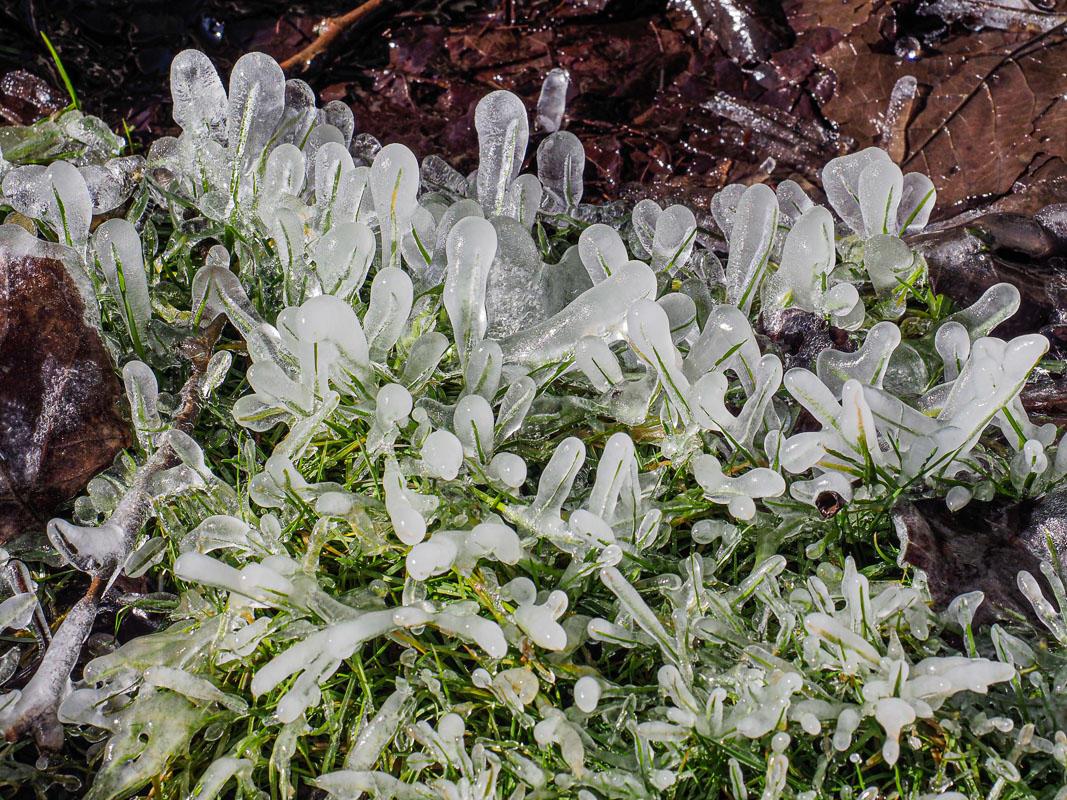 Bob Kovach - Grass Ice
