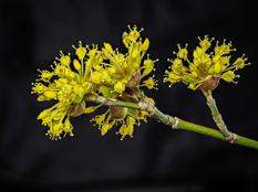 Bob Kovach - Blossoms