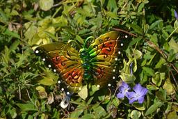 Lucile Kesterson - My butterfly Garden