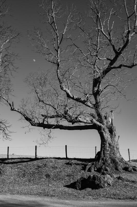 Michael Smith - Tree