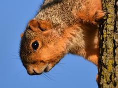Len Zentz - Fox Squirrel Up Close!