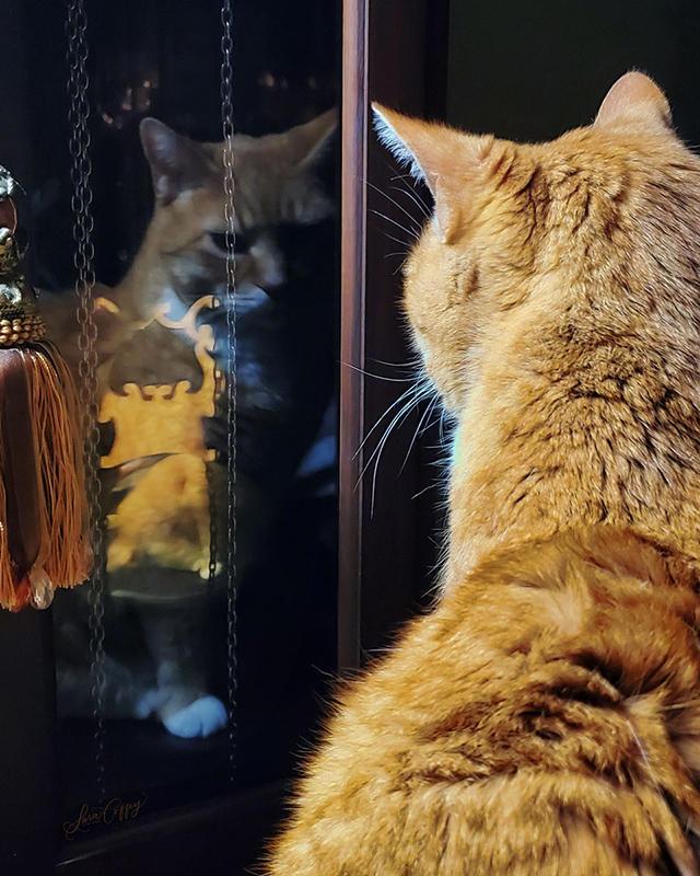 Sara Coffey - Kitty Reflection