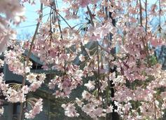 Ann Hopkins - Spring