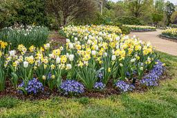 Bob Kovach - Spring Garden