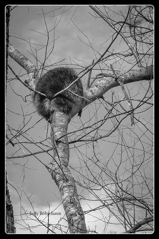 Judy Robichaux - Tree Hugger