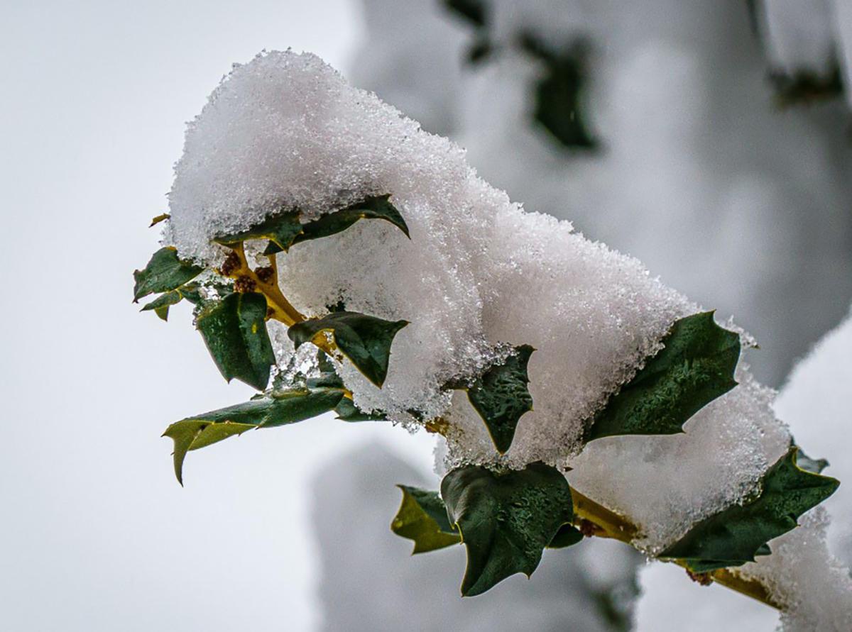 Bob Kovach  - Snow on Holly