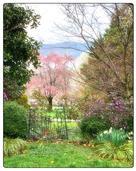 Judy Robichaux - The Garden Gate