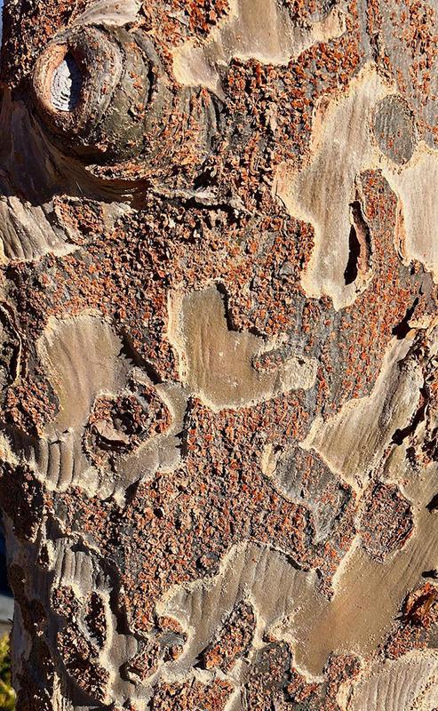 Ted Burrowes - Tree Bark