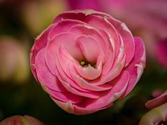 Bob Kovach - Tiny Flower