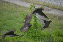 Lucile Kesterson - Birds of Prey