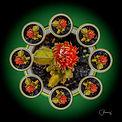 Chuck Almarez_Cactus Mandala.jpg