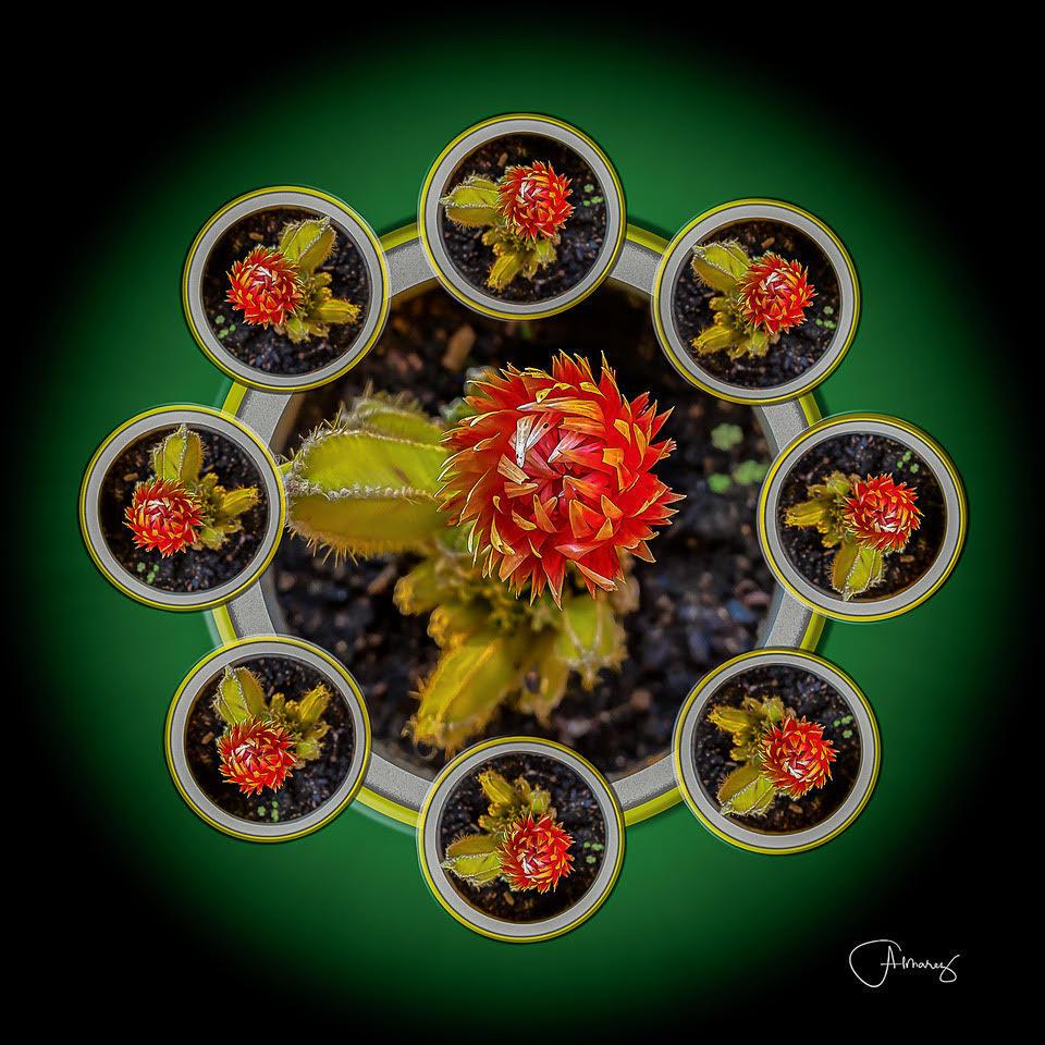 Chuck Almarez - Cactus Mandala
