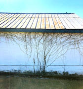 Claudette Benavitch - Flood Wall in BV