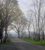Paul Sayegh - Morning Walk Along Enfield