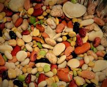 Lucile Kesterson - Loose Beans