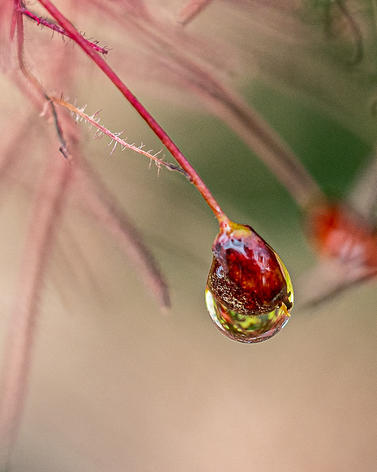 Andrea Popick - Rain Drop Reflection