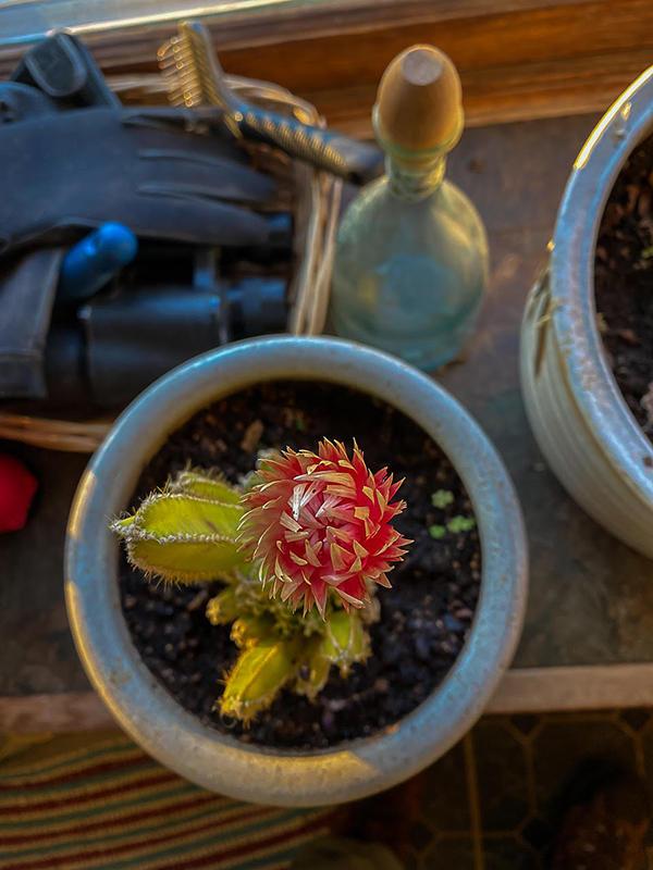 Chuck Almarez - Cactus (detail)
