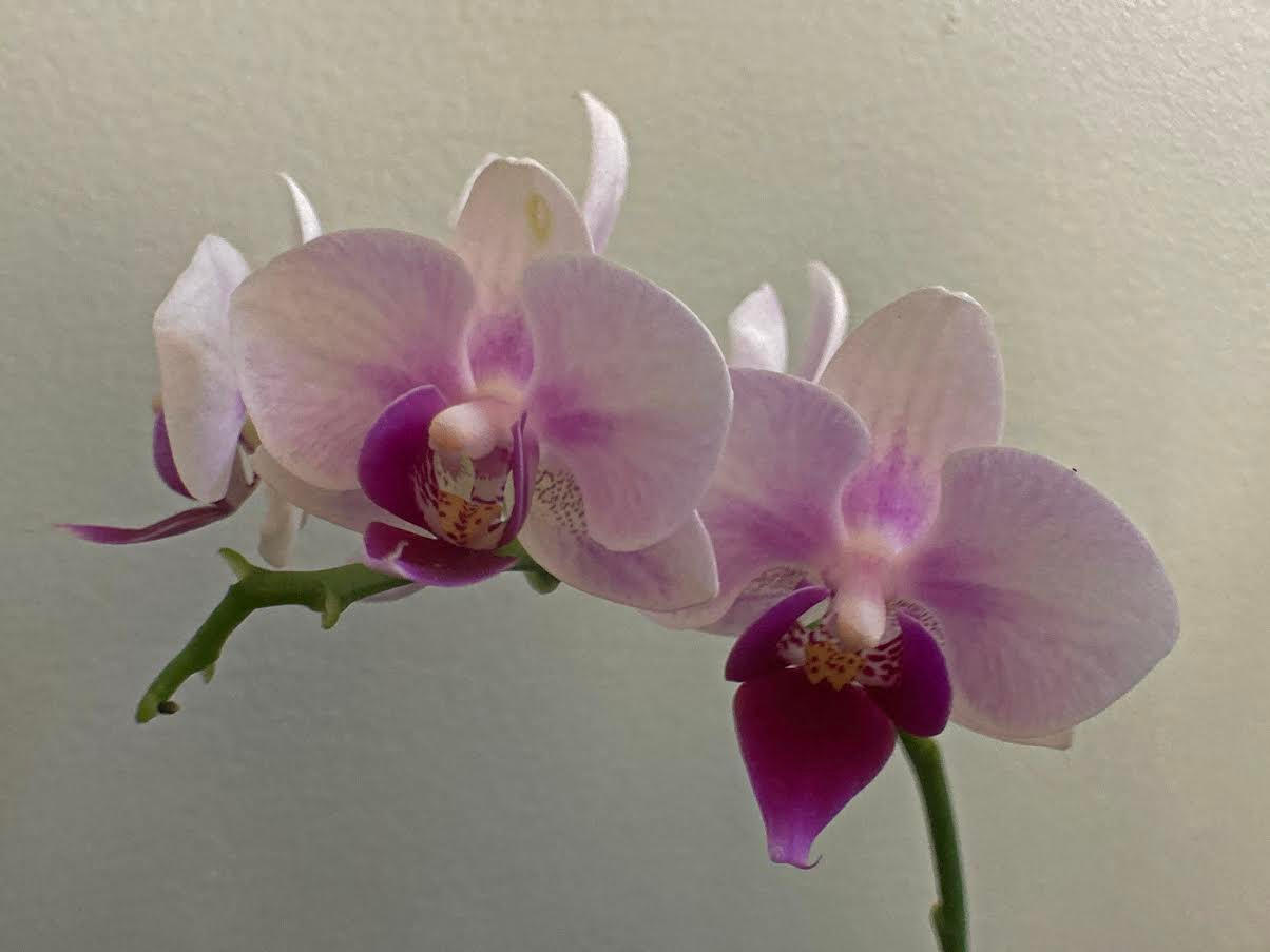 Michael Smith - Orchids