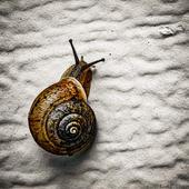 Keith Goggin - Garage Snail