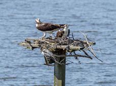 Bob Kovach - Birds of Prey