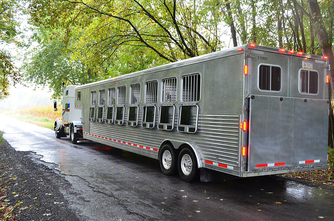 Horse Transporation | Hauling All Horses