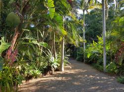 Tropical garden Ewingsdale