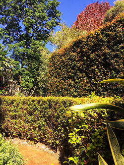 Foliage layers - Federal residence