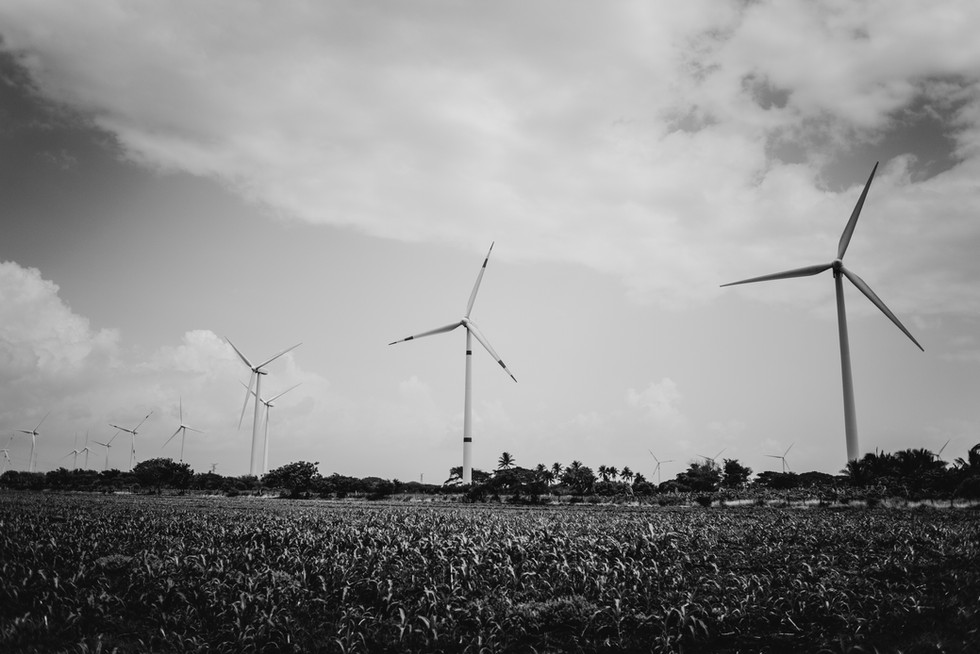 WINDMILLS TOWERING OVER A MILPA