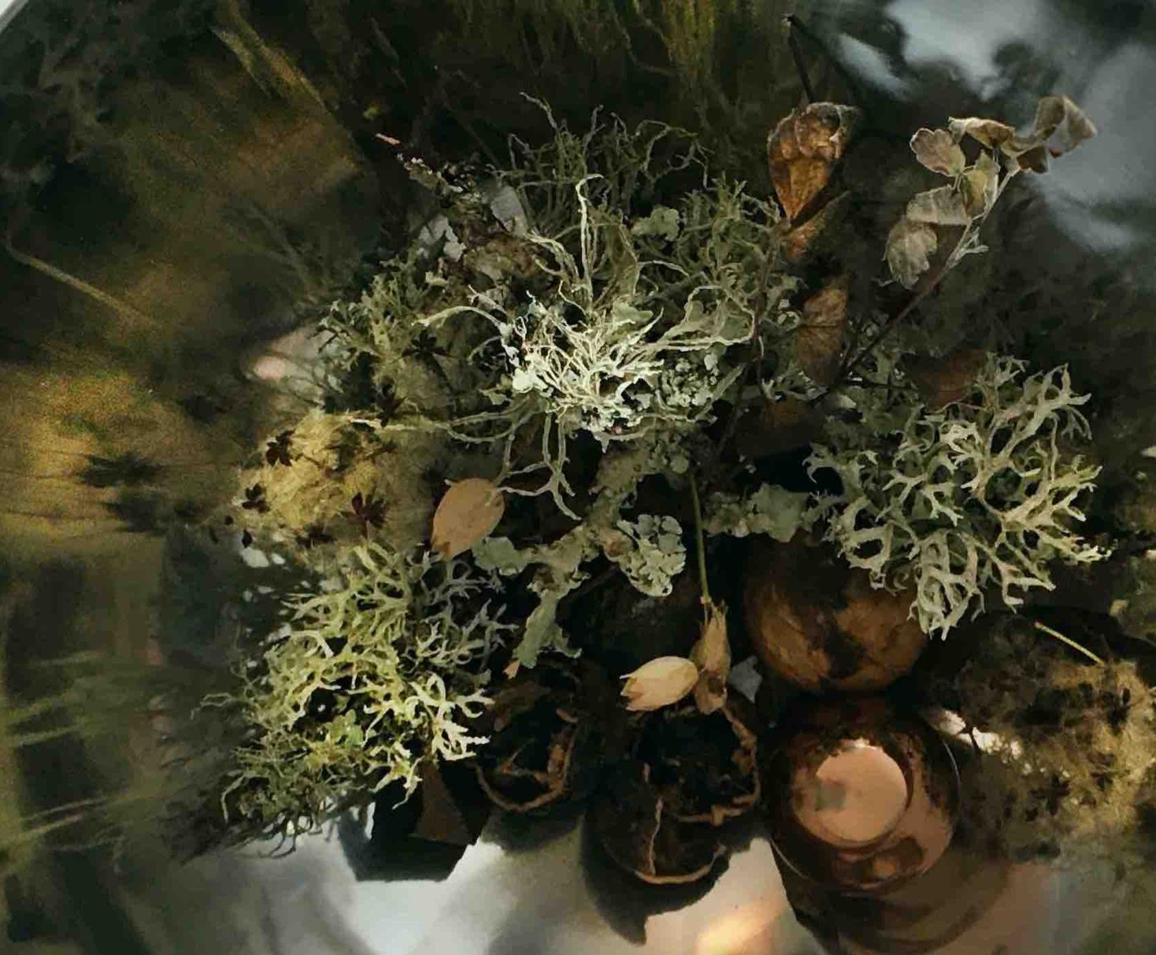 nic gotch photography moss