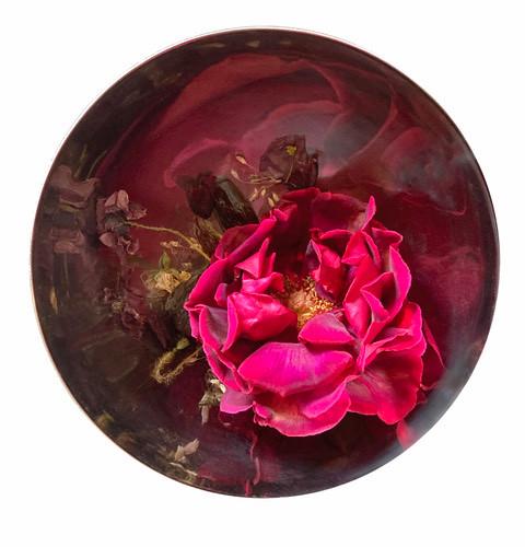 nic gotch afghan rose