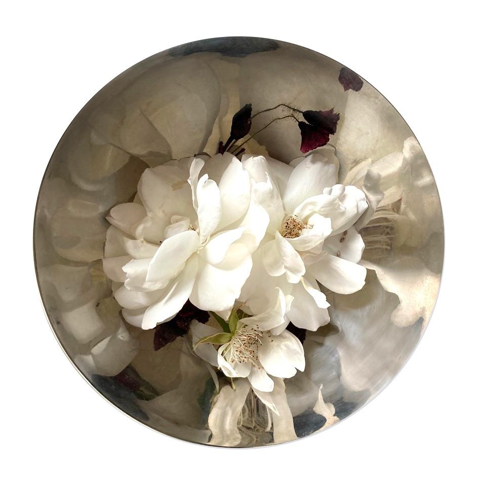 nic gotch pyrenees rose