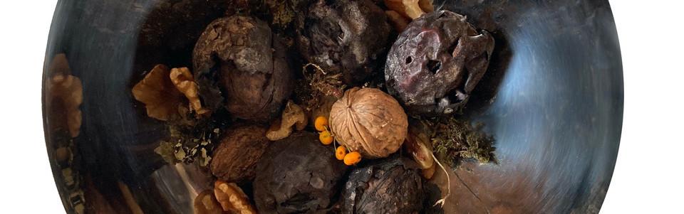 nic gotch walnut