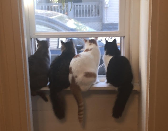 4Kitties_edited.jpg