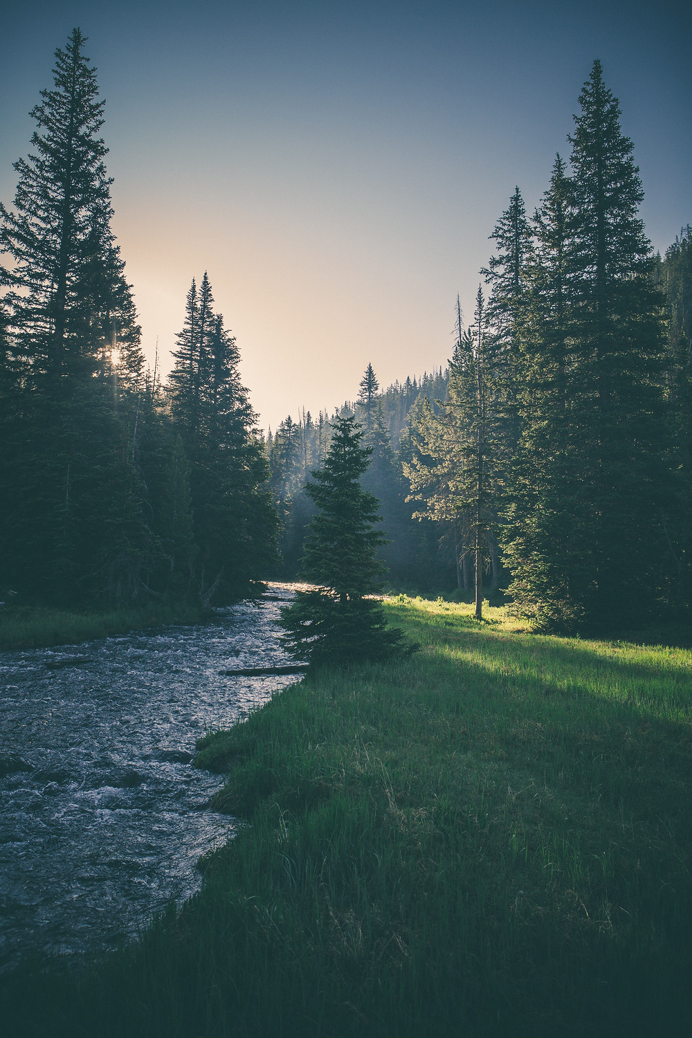 Carbon Down invests in forest conservation to offset user emissions