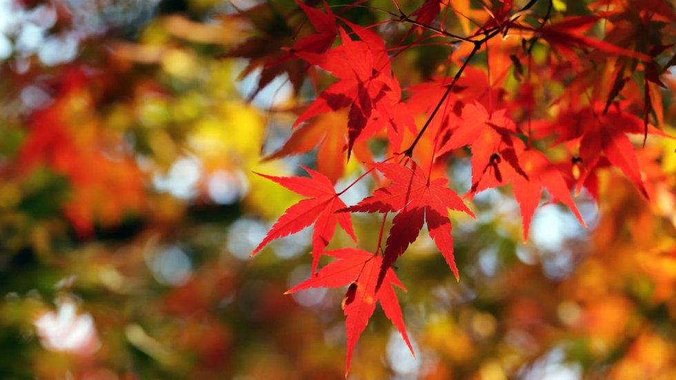 Fall learves 1.jpg