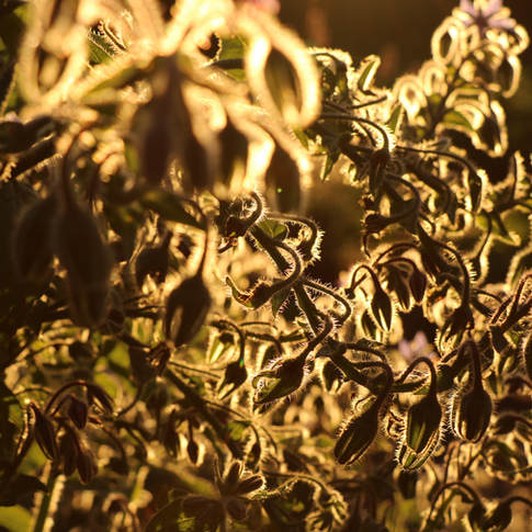 Honey plants milieu