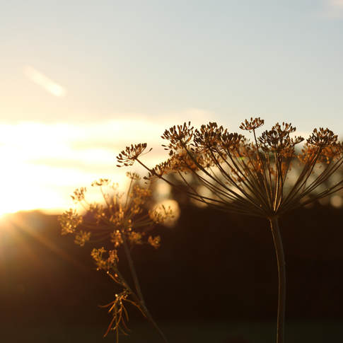 Coucher du soleil en août
