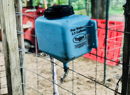 Medicate Your Pigs with the Trojan Pen Waterer