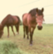 horse Fence under electric current surrounding
