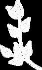 ナチュラル志向&自然派の方に、ワンネス石鹸|葉っぱの飾り