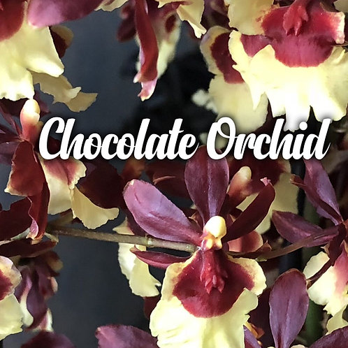 Chocolate Orchid Wax Melts