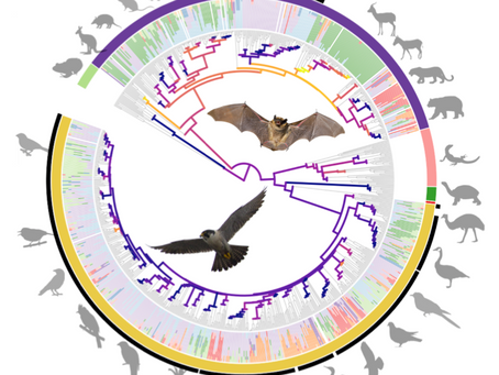 New paper on the evolution the vertebrate gut microbiome out in mBio!