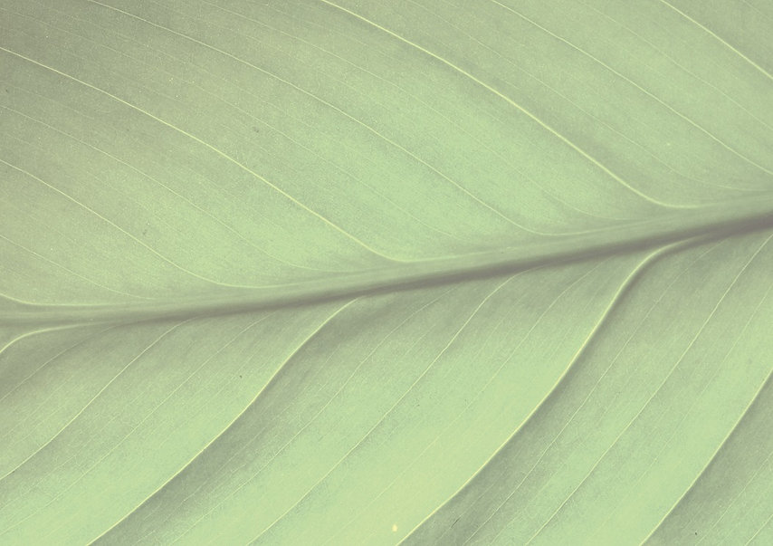 Herb-All Blatt40%_grün.jpg