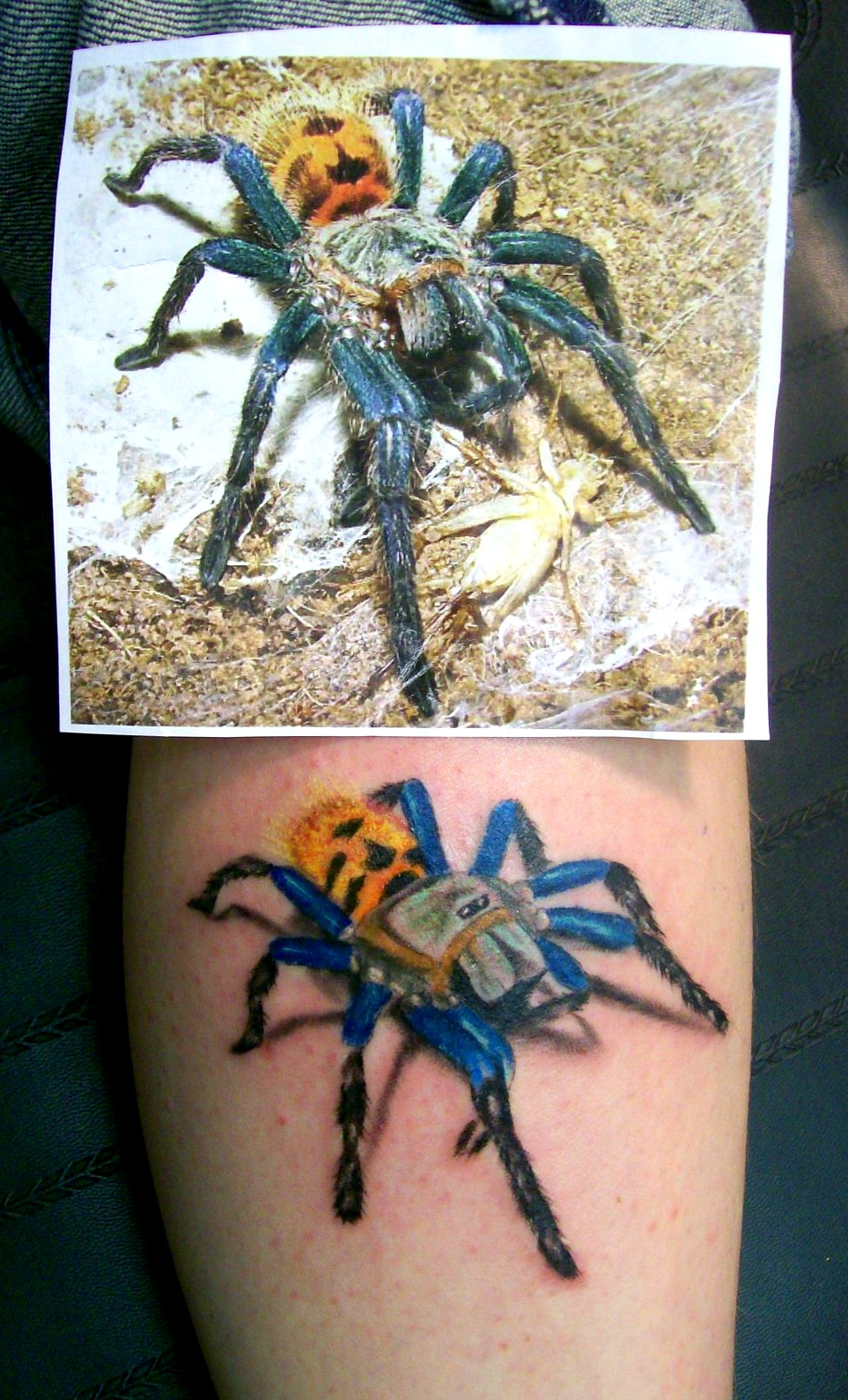Cobalt Blue Tarantula Spider Tattoo by T