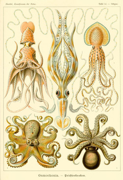 Inspiration Ernst Haeckel